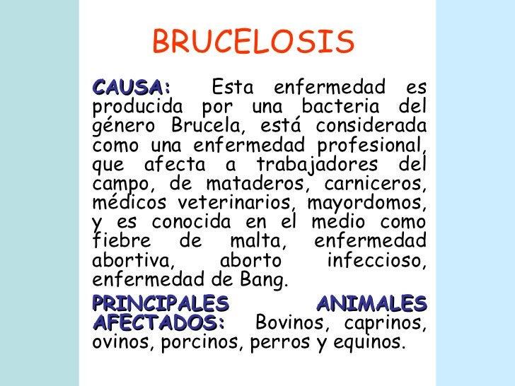 BRUCELOSIS CAUSA:   Esta enfermedad es producida por una bacteria del género Brucela, está considerada como una enfermedad...