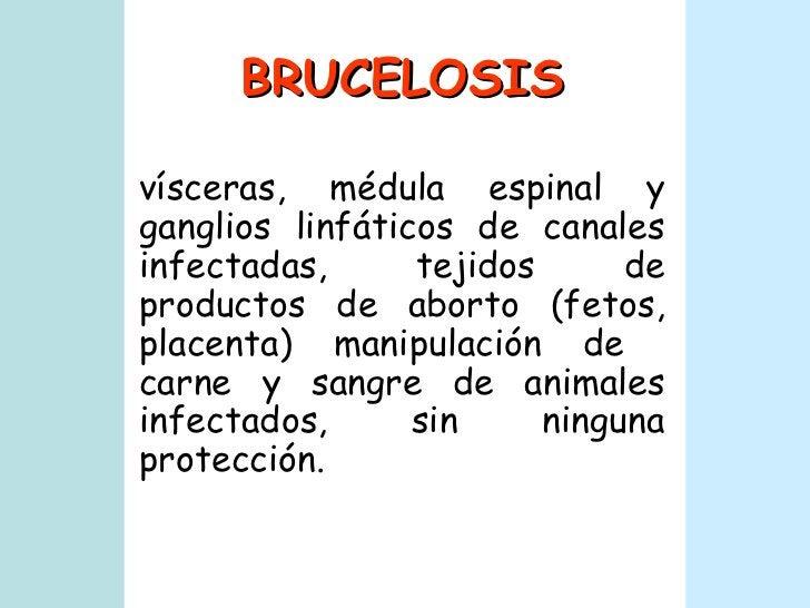 BRUCELOSIS vísceras, médula espinal y ganglios linfáticos de canales infectadas, tejidos de productos de aborto (fetos, pl...