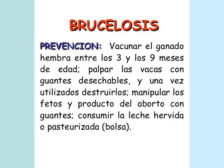 BRUCELOSIS PREVENCION:   Vacunar el ganado hembra entre los 3 y los 9 meses de edad; palpar las vacas con guantes desechab...