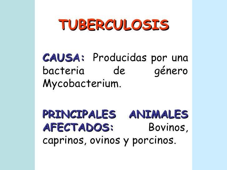TUBERCULOSIS CAUSA:   Producidas por una bacteria de género Mycobacterium. PRINCIPALES ANIMALES AFECTADOS:   Bovinos, capr...