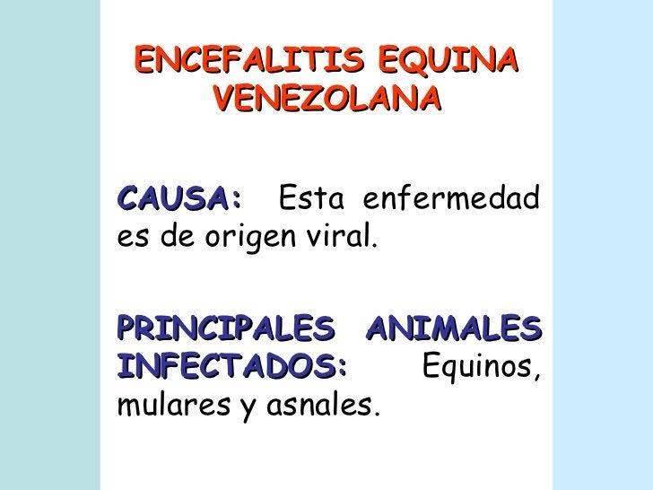 ENCEFALITIS EQUINA VENEZOLANA CAUSA:   Esta enfermedad es de origen viral. PRINCIPALES ANIMALES INFECTADOS:   Equinos, mul...