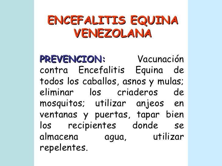PREVENCION:   Vacunación contra Encefalitis Equina de todos los caballos, asnos y mulas; eliminar los criaderos de mosquit...
