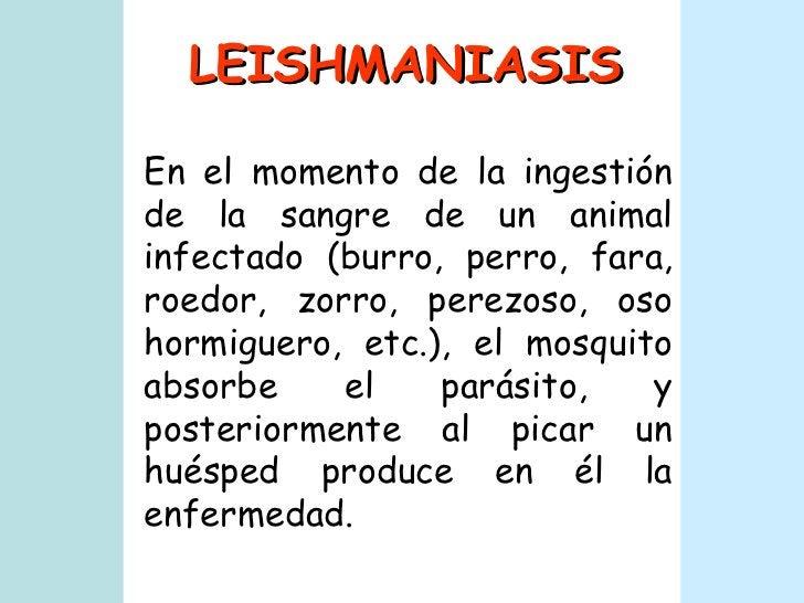 LEISHMANIASIS En el momento de la ingestión de la sangre de un animal infectado (burro, perro, fara, roedor, zorro, perezo...