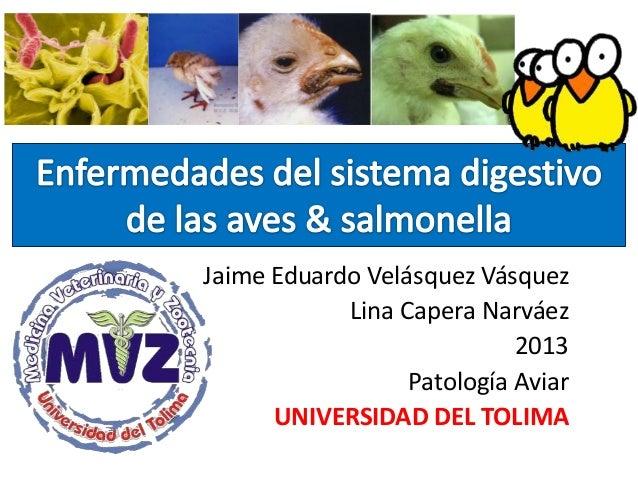 Jaime Eduardo Velásquez Vásquez Lina Capera Narváez 2013 Patología Aviar UNIVERSIDAD DEL TOLIMA