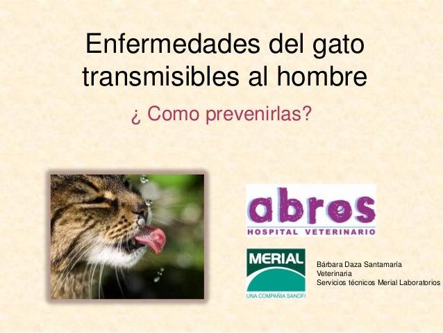 Enfermedades del gatotransmisibles al hombre   ¿ Como prevenirlas?                         Bárbara Daza Santamaría        ...