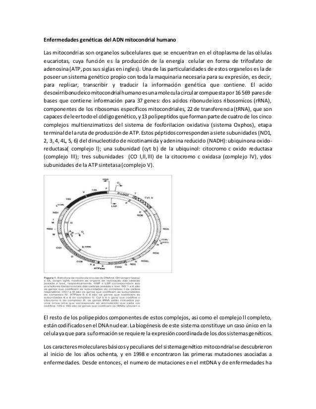 Enfermedades genéticas del ADN mitocondrial humano  Las mitocondrias son organelos subcelulares que se encuentran en el ci...