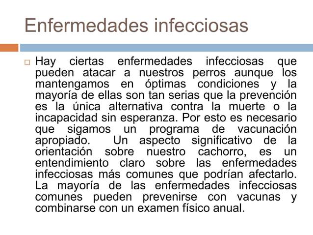 Enfermedades infecciosas   Hay ciertas enfermedades infecciosas que pueden atacar a nuestros perros aunque los mantengamo...