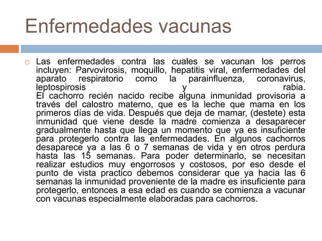 Enfermedades vacunas   Las enfermedades contra las cuales se vacunan los perros incluyen: Parvovirosis, moquillo, hepatit...
