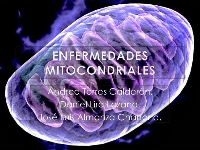 Andrea Torres Calderón. Daniel Lira Lozano. José Luis Almanza Chanona.