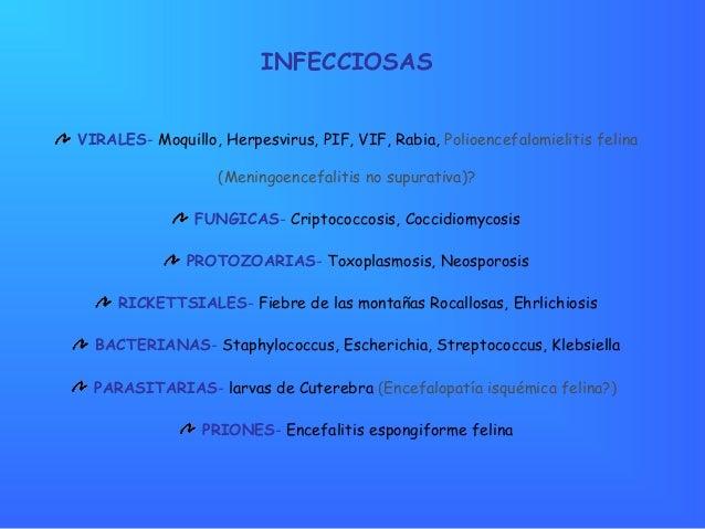 Vasculitis primaria del snc pdf converter