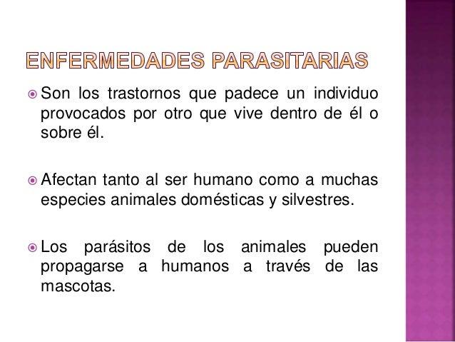 Los indicios de la enfermedad de las setas de los parásitos