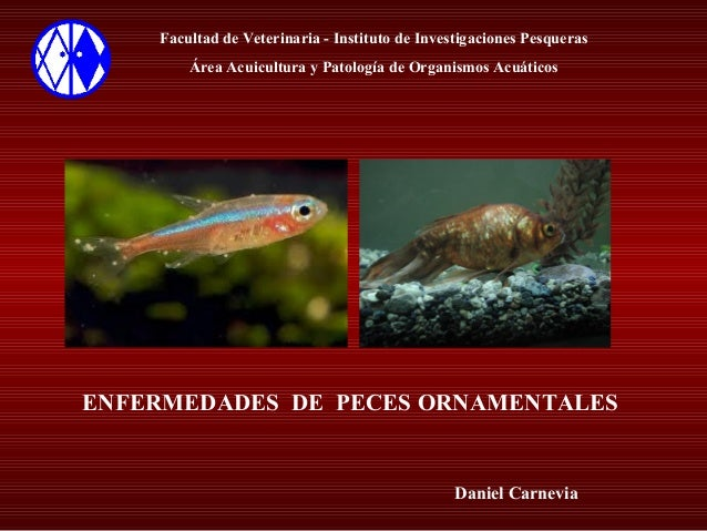Enfermedades peces ornamentales for Acuarios de peces ornamentales