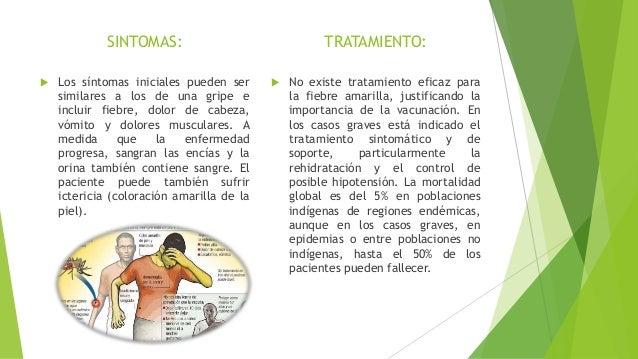 Diapositivas de enfermedades transmitidas por artropodos Slide 3
