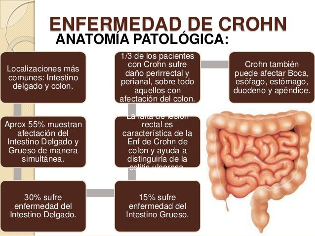 ENFERMEDAD DE CROHN ANATOMÍA PATOLÓGICA:  Localizaciones más comunes: Intestino delgado y colon.  1/3 de los pacientes con...