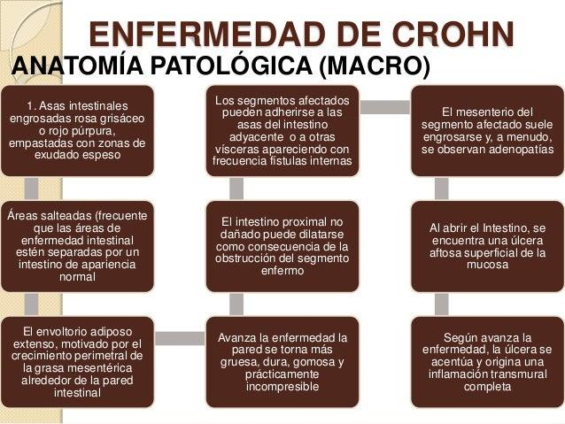 ENFERMEDAD DE CROHN ANATOMÍA PATOLÓGICA (MACRO) 1. Asas intestinales engrosadas rosa grisáceo o rojo púrpura, empastadas c...