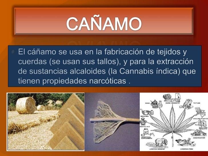 CAÑAMO<br />El cáñamo se usa en la fabricación de tejidos y cuerdas (se usan sus tallos), y para la extracción de sustanci...