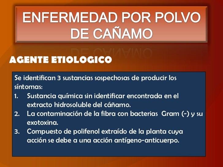 ENFERMEDAD POR POLVO DE CAÑAMO<br />AGENTE ETIOLOGICO<br />Se identifican 3 sustancias sospechosas de producir los síntoma...