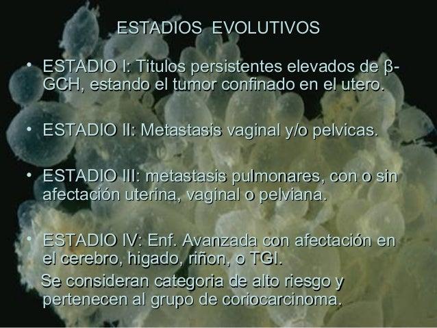 ESTADIOS EVOLUTIVOSESTADIOS EVOLUTIVOS • ESTADIO I: Titulos persistentes elevados deESTADIO I: Titulos persistentes elevad...