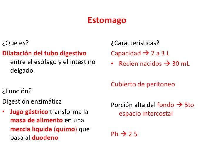 Estomago<br />¿Que es?<br />Dilatación del tubo digestivo entre el esófago y el intestino delgado.<br />¿Función?<br />Dig...