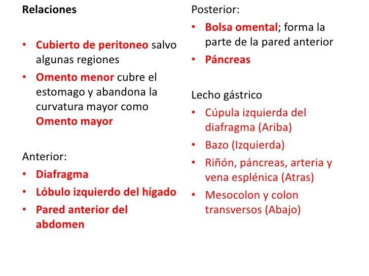 Relaciones<br />Cubierto de peritoneo salvo algunas regiones<br />Omento menor cubre el estomago y abandona la curvatura m...