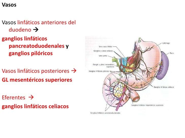 Vasos<br />Vasos linfáticos anteriores del duodeno <br />ganglios linfáticos pancreatoduodenales y ganglios pilóricos<br ...