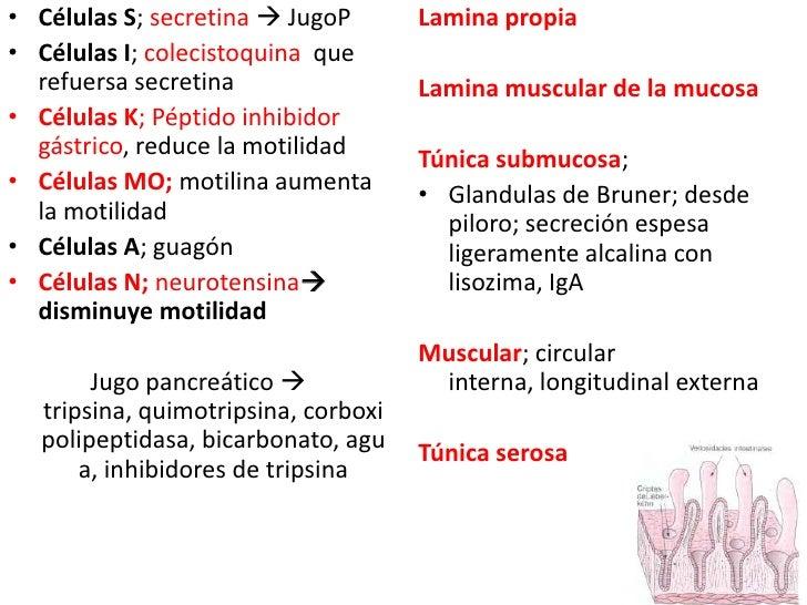 Células S; secretina JugoP<br />Células I; colecistoquina  que refuersa secretina<br />Células K; Péptido inhibidor gástr...