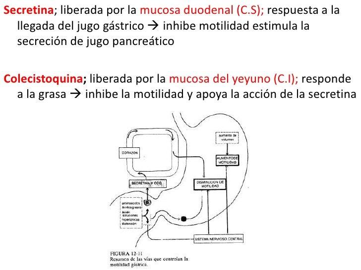 Secretina; liberada por la mucosa duodenal (C.S); respuesta a la llegada del jugo gástrico  inhibe motilidad estimula la ...