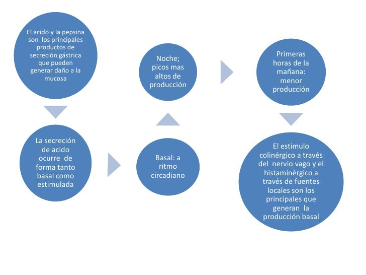 El acido y la pepsina son  los principales productos de secreción gástrica  que pueden generar daño a la mucosa<br />Prime...