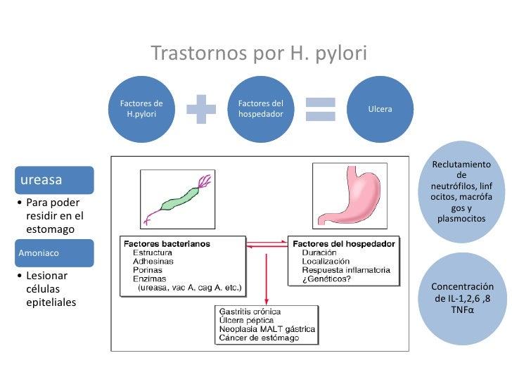 Trastornos por H. pylori<br />