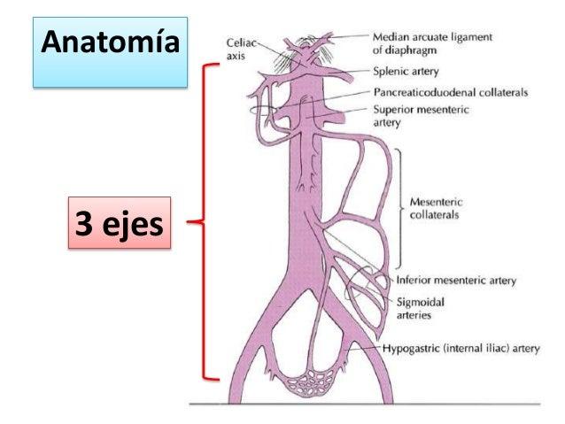 Enfermedad vascular mesenterica