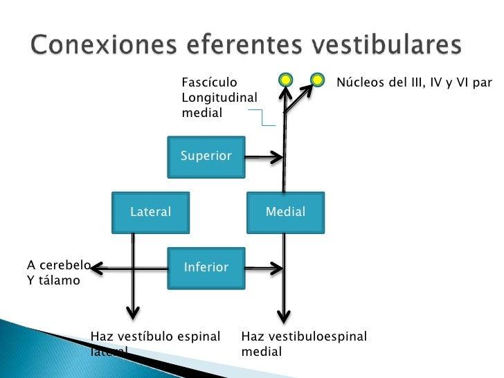 Las lesiones periféricas envuelven el oído medio (bullatimpánica) e interno.Oído medio: Ladeo de cabeza al lado ipsilatera...