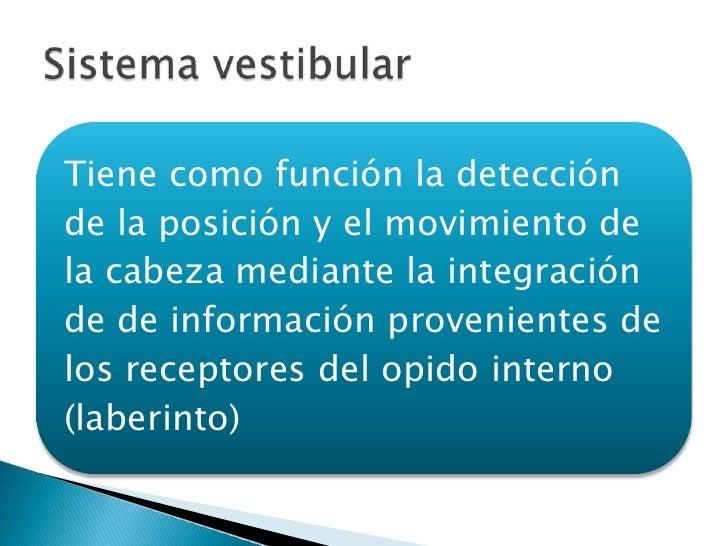 Tiene como función la detecciónde la posición y el movimiento dela cabeza mediante la integraciónde de información proveni...