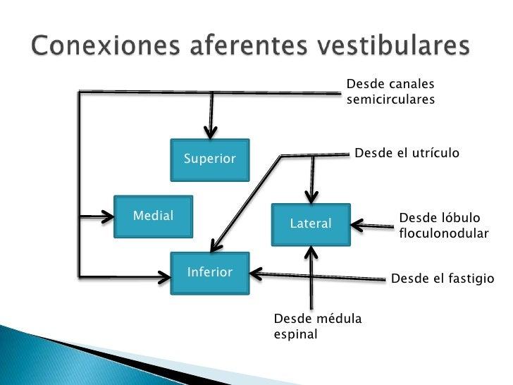 Los signos cardinales de enfermedadvestibular unilateral son cabezainclinada hacia lateral, nistagmo,marcha en círculos (h...