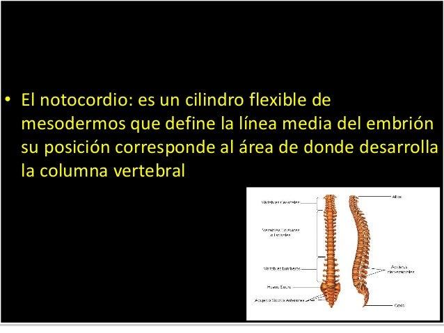El dolor en los riñones y detrás de la espátula
