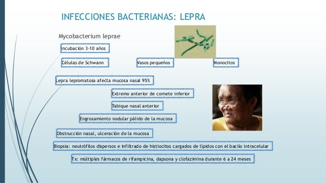 INFECCIONES BACTERIANAS: LEPRA Mycobacterium leprae Incubación 3-10 años Células de Schwann Vasos pequeños Obstrucción nas...