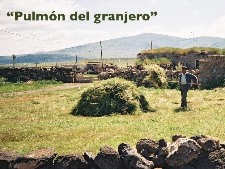"""Pulmón del granjero"""