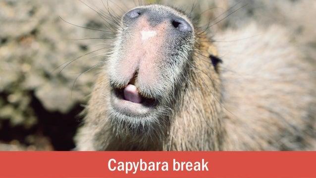 Capybara break