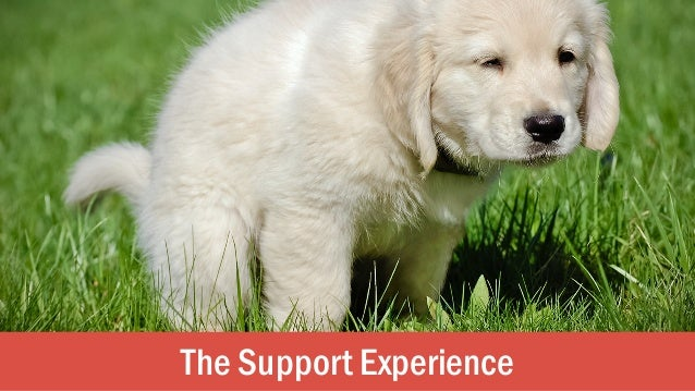 The Support Experience