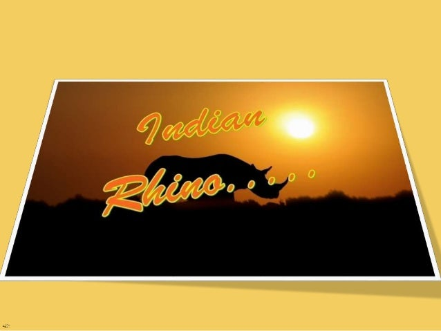 "Rhinoceros  Rhinoceros are often called as rhino  They belong to the ""Rhincerotidae"" family  They are usually identifie..."