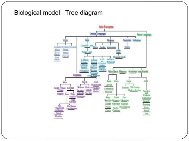 English language models biological model tree diagram ccuart Gallery