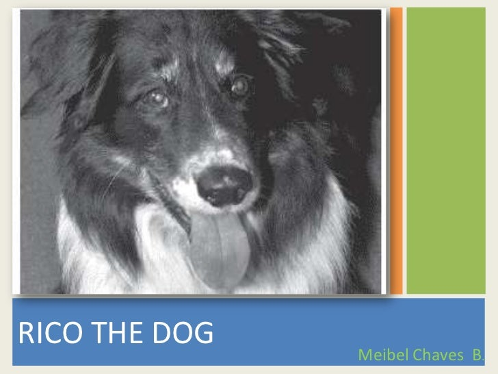 RICO THE DOG<br />Meibel Chaves  B.<br />