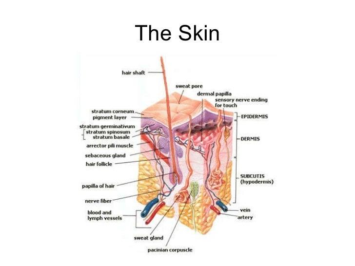 Acne Rosacea And Hidradenitis Suppurativa