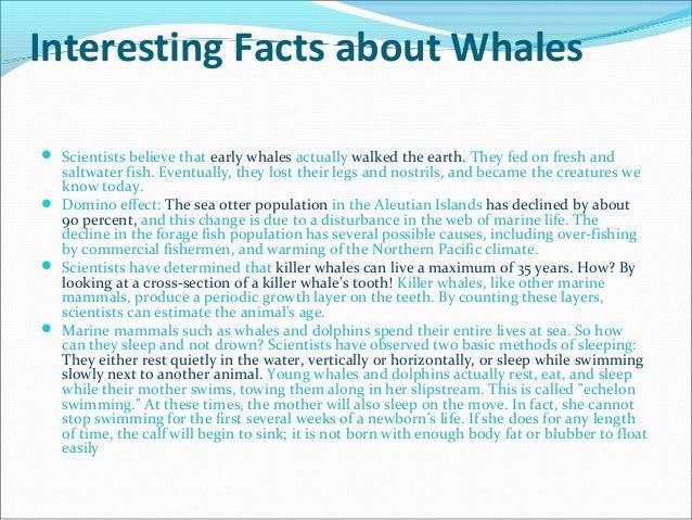 English whale