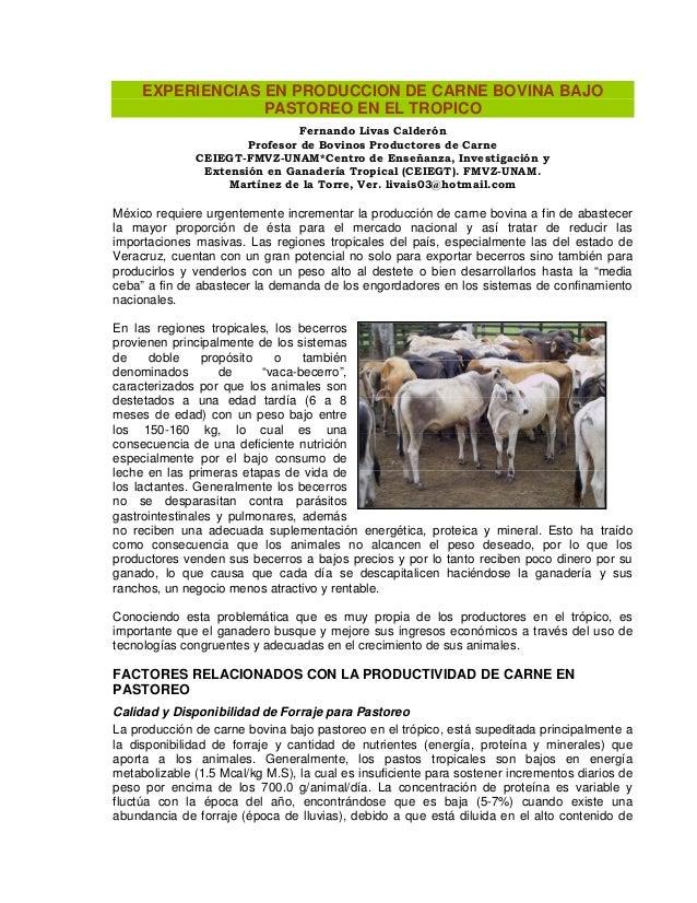 EXPERIENCIAS EN PRODUCCION DE CARNE BOVINA BAJO PASTOREO EN EL TROPICO Fernando Livas Calderón Profesor de Bovinos Product...