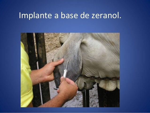 anabolicos para caballos en venezuela