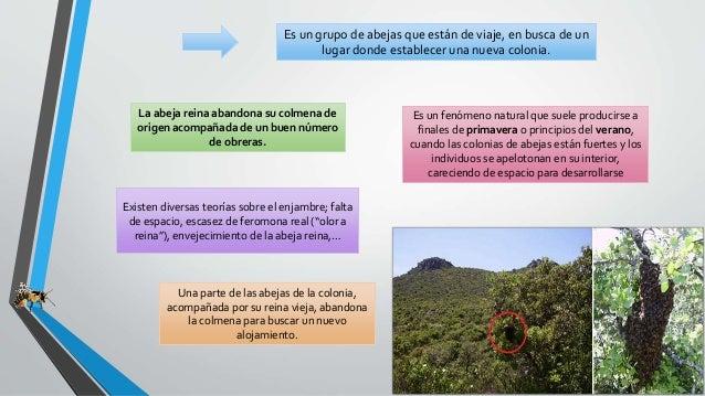 Enjambre Slide 2