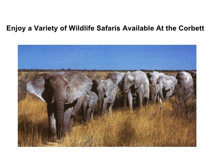 Enjoy a Variety of Wildlife Safaris Available At the Corbett