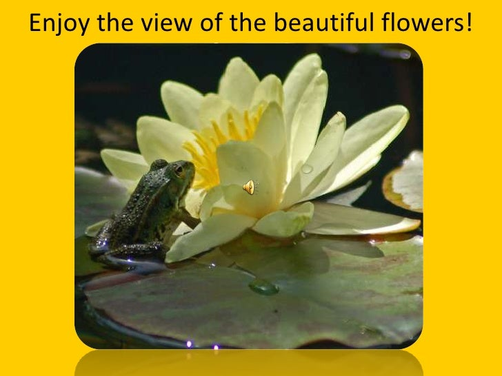 Enjoy the view of the beautiful flowers!<br />