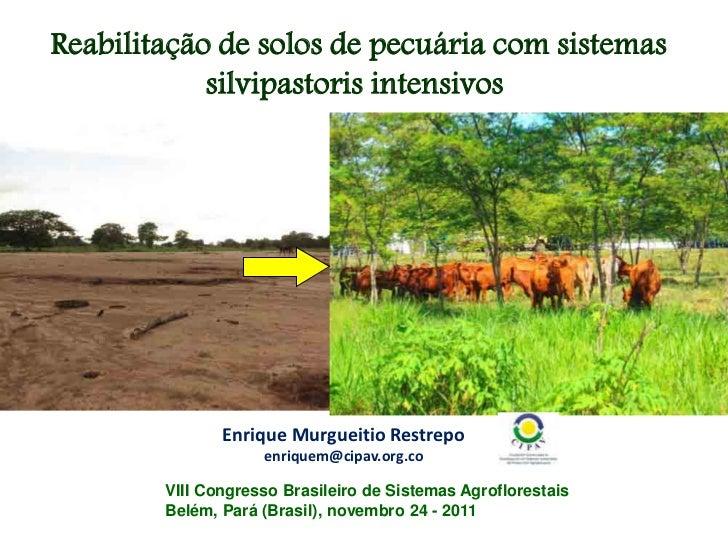 Reabilitação de solos de pecuária com sistemas            silvipastoris intensivos               Enrique Murgueitio Restre...