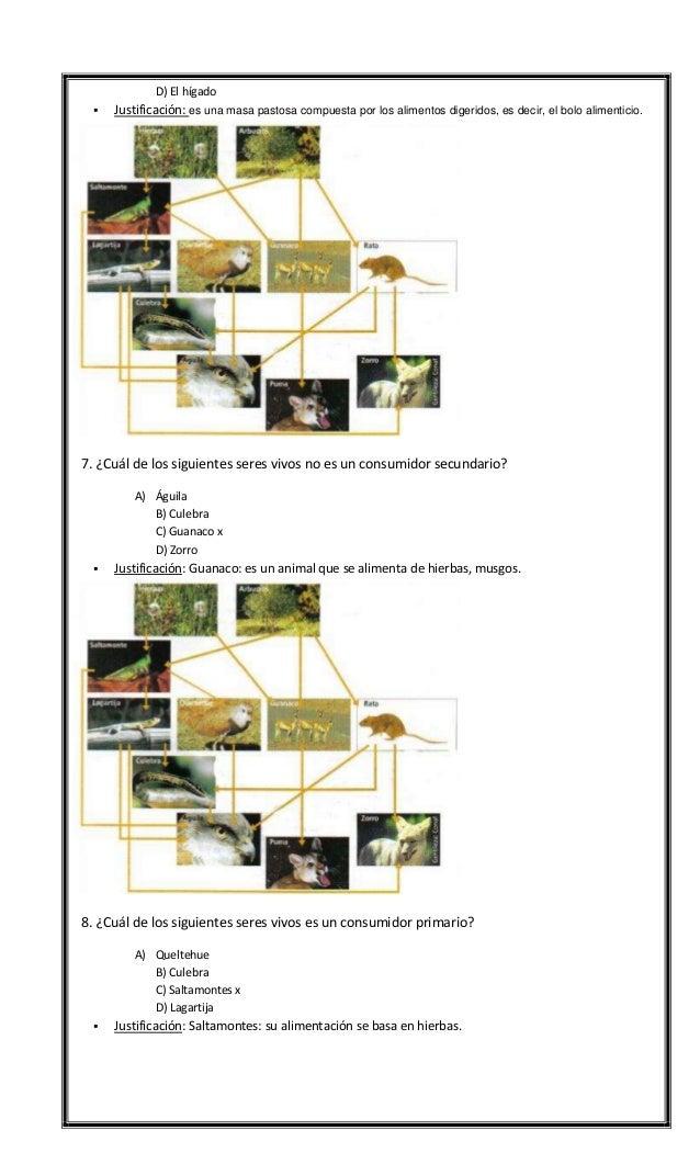 Ensayo 4 Slide 2